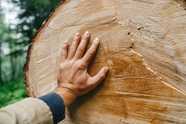 massivholz-kat1