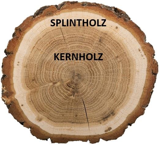Splintholz-Kernholz
